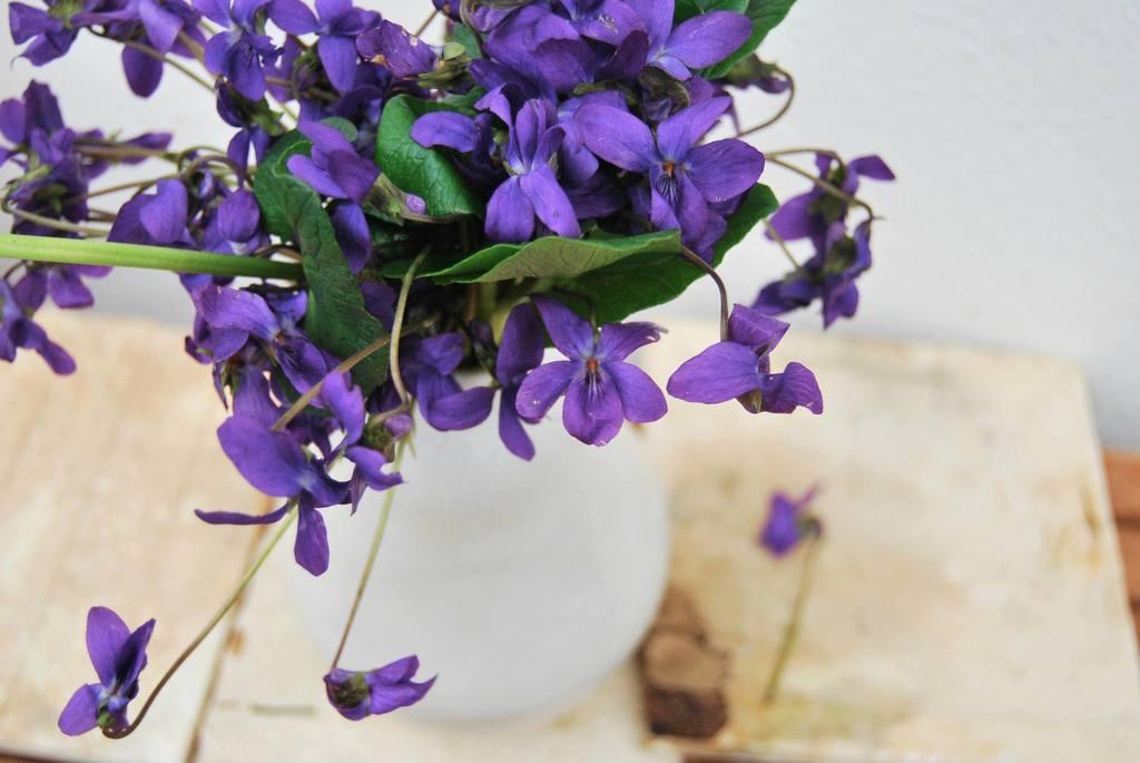 Wild Violets: Rethinking Eliza Doolittle's Favorite Flower