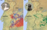 Smart vultures never cross the Spain-Portugal border. Why?