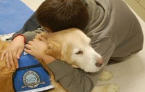Why we turn to dogs when disaster strikes
